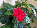 Růže z chodby panelového domu, autor: PhDr. Jiří Bartoň