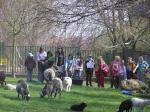 ovce duben